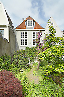The owner has created a 'wild' garden with ferns, a red-leaved Acer Japonica, a Magnolia tree and a Cersis tree with bright pink blossoms as eyecatchers.