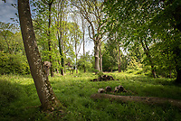 BNPS.co.uk (01202 558833)<br /> Pic: MrAndMrsClarke/BNPS<br /> <br /> Take a walk in the woodlands...<br /> <br /> A luxury house on an English country estate where the Allies plotted the infamous assassination of one of Adolf Hitler's top henchmen has gone on the market.<br /> <br /> Rooftops, a Norwegian-style chalet, is located on the Moreton Paddox estate in Warwickshire where 4,000 Czech soldiers were billeted during the Second World War.<br /> <br /> The plot to assasinate Nazi monster SS General Reinhard Heydrich involved two Czech soldiers who parachuted into Prague where they attacked and killed him as he was driven to work. <br /> <br /> His death led to appalling Nazi reprisals on locals, with more than 1,300 men, women and children massacred.<br /> <br /> The Edwardian mansion at Moreton Paddox that was requisitioned for the war effort was later demolished and Rooftops was built on the grounds in 2009.