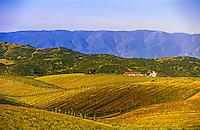 Brousseau Vineyards near the Pinnacles, Monterey County, California USA