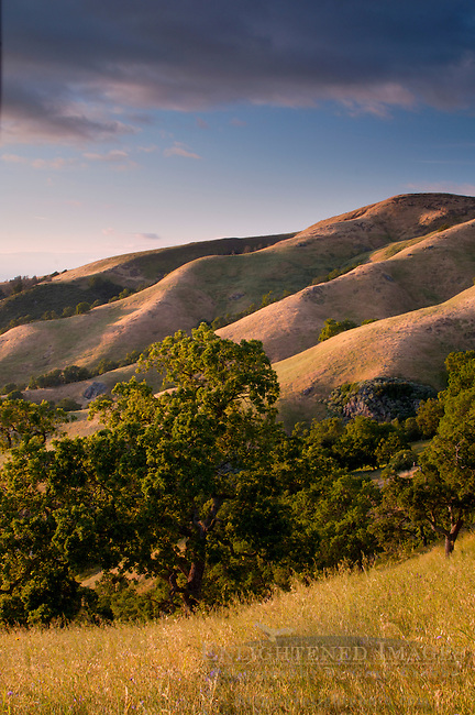 Sunset light on oak trees and rolling hills in spring, Mount Diablo State Park, California
