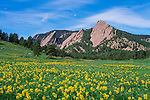 Moon above the Flatirons, golden banner in Chatauqua Park meadow, Boulder, Colorado, USA