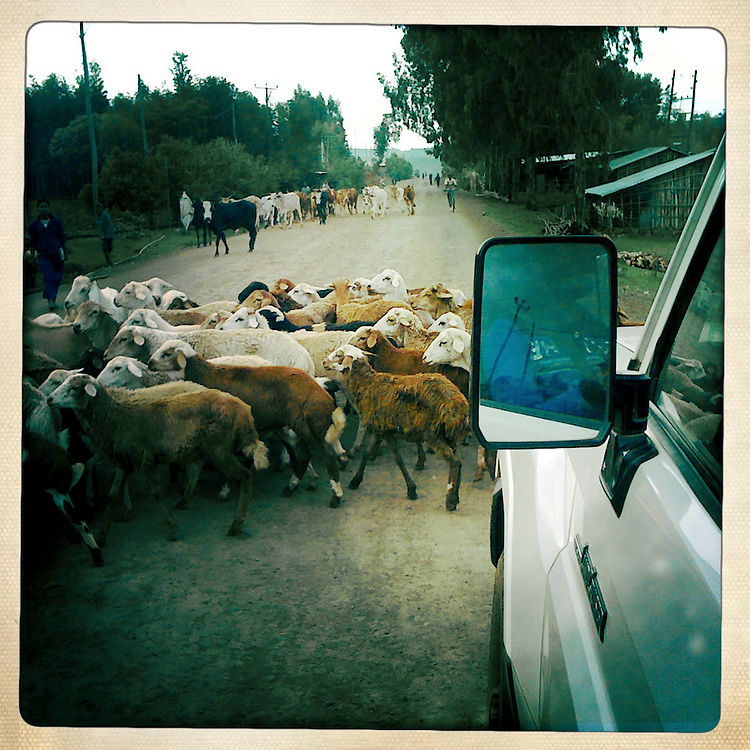 Traffic in Northern Ethiopia, Yilmana Densa, Ethiopia.