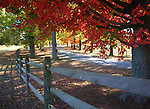 red autumn leaves with road and split rail fence, Fine Art Photography, photographs fulfill a creative vision of the artist fine art photography, Bennett, buy art, limited edition print, buy fine art, travel photography, photo art, prints, fine art, Fine Art Photography by Ron Bennett, Fine Art, Fine Art photography, Art Photography, Copyright RonBennettPhotography.com © Fine Art Photography by Ron Bennett, Fine Art, Fine Art photography, Art Photography, Copyright RonBennettPhotography.com ©