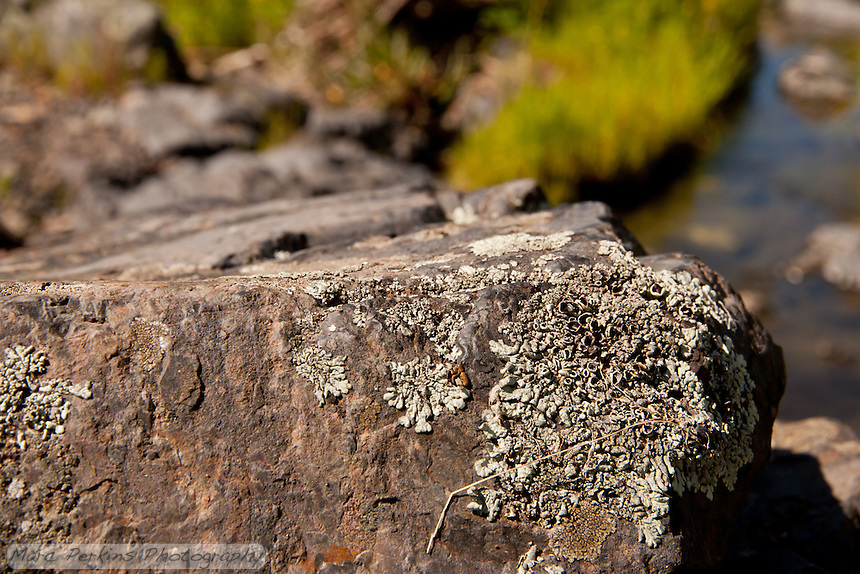 This white ascomycete lichen is growing on a rock wtih a view of a stream.  The dark circles on the lichen's body are fruiting bodies (reproductive structures).  The main lichen in view are foliose, but there also appear to be a few crustose on the rock too. From Greg's and my hike in Upper Hot Spring Canyon in the Cleveland National Forest.