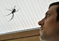 Madagascan Golden Orb Web spider at London Zoo stocktake<br /> Annual stocktake of every creature in the zoo, spanning 850 species, postponed from January after a fire in just before Christmas last year, in which a number of animals died, at London Zoo <br /> London Zoo Stocktake photocall, London, England on February 07, 2018.<br /> CAP/JOR<br /> &copy;JOR/Capital Pictures