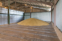 First load of winter barley tipped into store - Liincolnshire Wolds; July