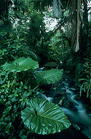 River in Rainforest, El Yunque, Caribbean National Forest, Puerto Rico, USA