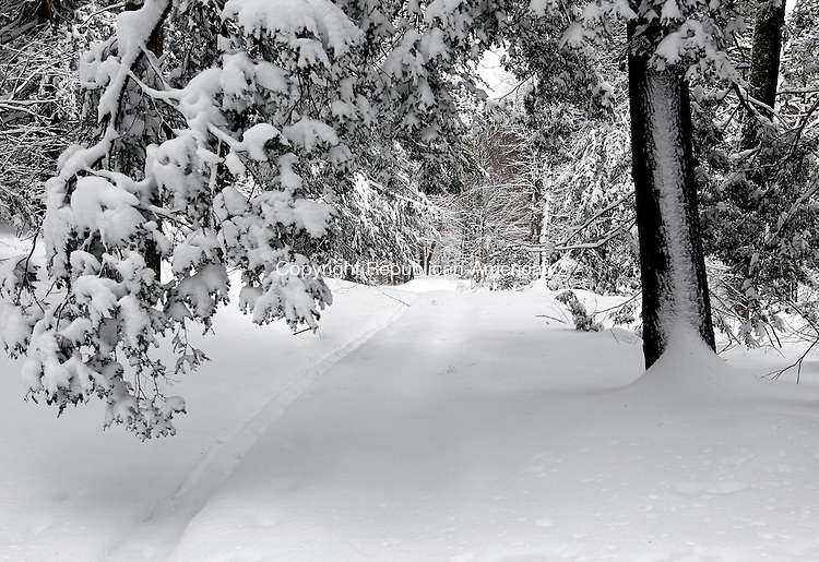 Litchfield, CT- 14 February 2014-021414CM05-  COUNTRY LIFE BANNERS---- Snow engulfs a hiking trail at White Memorial in Litchfield on Friday.  Christopher Massa Republican-American