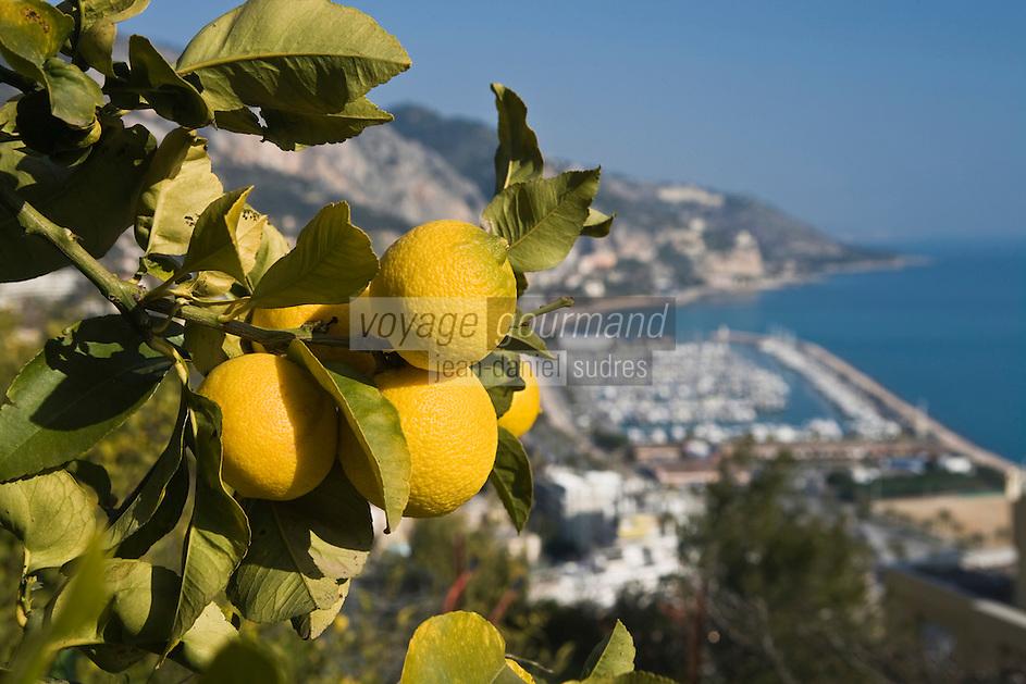 Europe/France/06/Alpes-Maritimes/Menton: Depuis le verger  de citronniers de l'Au-Delà de Xavier Habart vue sur Menton