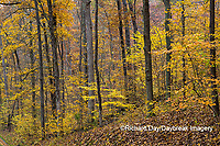 63895-15707 Fall Color Giant City State Park IL
