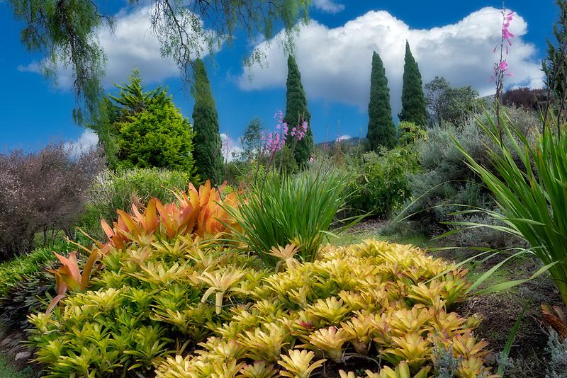 Mostly bromeliads in gardens at Ali'i Kula Lavender Farm. Maui, Hawaii