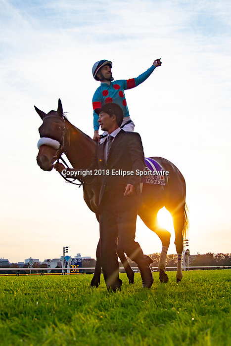 FUCHU,JAPAN-NOVEMBER 25: Almond Eye,ridden by Christophe Lemaire, after winning the Japan Cup at Tokyo Racecourse on November 25,2018 in Fuchu,Tokyo,Japan (Photo by Kaz Ishida/Eclipse Sportswire/Getty Images)