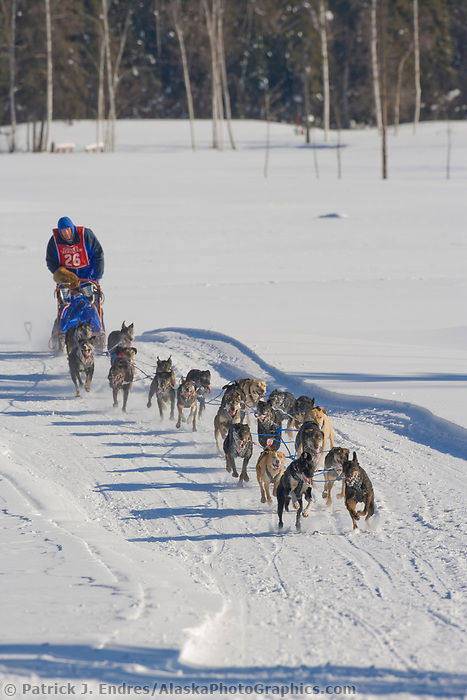Musher Neal Johnson, 2007 Open North American Championship sled dog race (the world's premiere sled dog sprint race) is held annually in Fairbanks, Alaska.