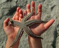 A young boy holds a starfish found on Folly Beach, near Charleston, SC.