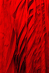 Red Silk 01 - Detail of layered red silk dress.