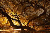 Condor Park Nights 10-8-11