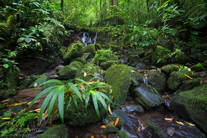Stream running through Tropical Premontane Rainforest. Central Caribbean foothills, Costa Rica. May.