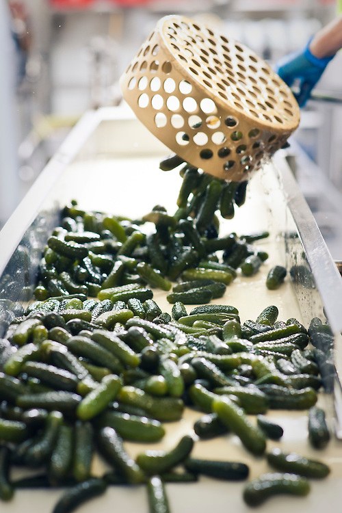 Spring gully producer of spiced gherkins, pickles, honeys,
