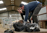 Kate Duchess of Cambridge Katherine Catherine Middleton taking part in sheep shearing with Jack Cartmel during a visit to Deepdale Hall Farm, a traditional fell sheep farm, in Patterdale, Cumbria. Photo Credit: ALPR/AdMedia