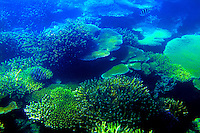 Underwater coral at South Seas Island in Fiji