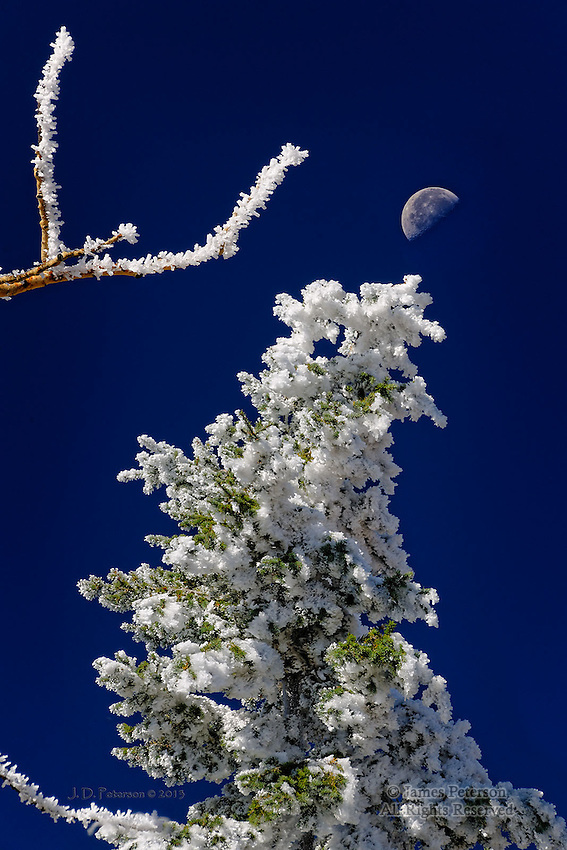 Frosted Trees with Half Moon, Ski Mountain, Colorado