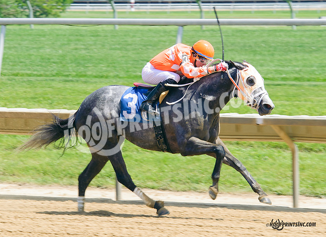 Madonna's Conquest winning at Delaware Park  on 5/25/15