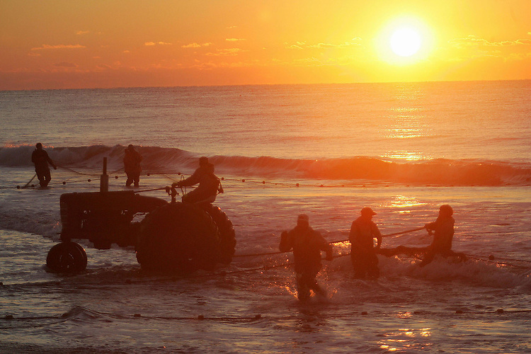 Chuck Beckley   Up with the sun, the crew starts to pull a net full of mullets into shore. with a tractor.