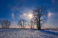 Sundogs and cotton wood trees<br />Grande Pointe<br />Manitoba<br />Canada