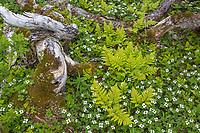 Vegetation along the Lost Lake Trail in the Chugach National Forest, Kenai Peninsula, Alaska.