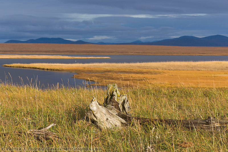 Safety sound and wetland grasses, Seward Peninsula, Alaska.