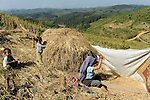 LAOS Provinz Oudomxay , Ethnie Khmu , auf den Bergen wird Brandrodung fuer Subsistenzlandwirtschaft betrieben, Anbau von Hochland Reissorten , die Ertraege sind sehr gering 1-2 Tonnen pro Hektar , Frau Dao aus Dorf Laksaosong beim Dreschen / LAOS province Oudomxay , village Laksaosong, ethnic group Khmu, rice farming in mountains