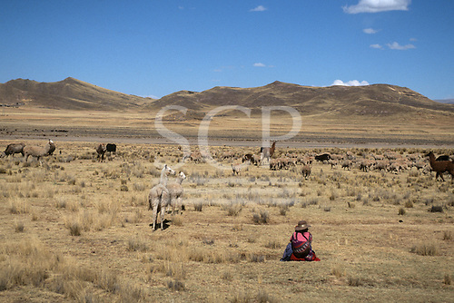 Altiplano, Peru. Woman in traditional Amerindian dress tending her flock of sheep and llamas in an arid landscape with mountains in the background.
