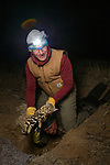 Black-footed Cat (Felis nigripes) veterinarian, Arne Lawrenz, holding sedated male for collaring after biologist, Alex Sliwa, dug him out, Benfontein Nature Reserve, South Africa