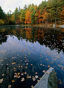 Fall Colors around a small pond in the state of New Hampshire, USA, Which is located in New England