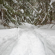 This photo represents December in the 2018 White Mountains New Hampshire calendar. Fresh snowshoe tracks in forest after a dusting of snow in Lincoln, New Hampshire. You can purchase a copy of the calendar here: http://bit.ly/2rND4Kf