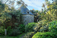 France, Manche (50), Vauville, Jardin botanique du château de Vauville, le pigeonnier et cordylines australes, Mahonia, bambous