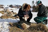 Veterinarian Douglas Chilcoat checks one of Wayne Curtis Siberian Huskies in Koyuk on Friday as Wayne looks on.