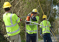 Jason Collins of Pike, center, pulls on a damaged feeder line during repair work in South Miami-Dade county after Hurricane Irma Sept 11, 2017.  (Photo by David Adame/For FPL)