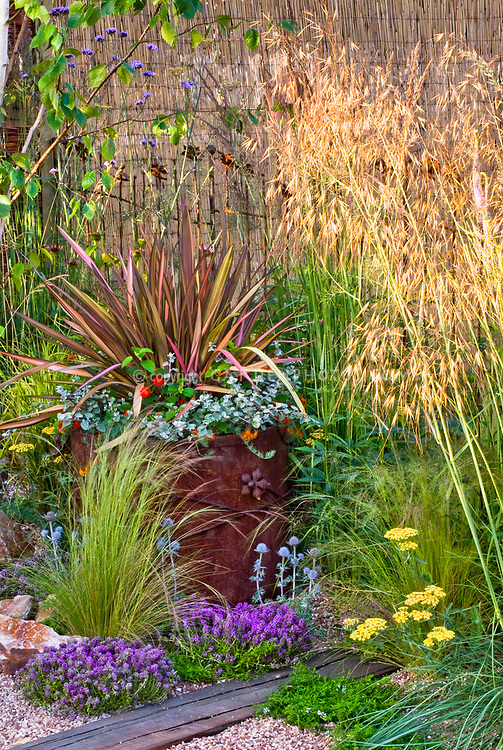 Container garden with phormium plant flower stock for Spiky ornamental grass