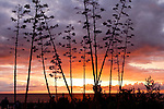 Stormy Pacific Sunset through Trees, Newport Beach,California