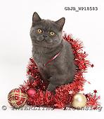 Kim, CHRISTMAS ANIMALS, photos, GBJBWP18583,#XA# stickers