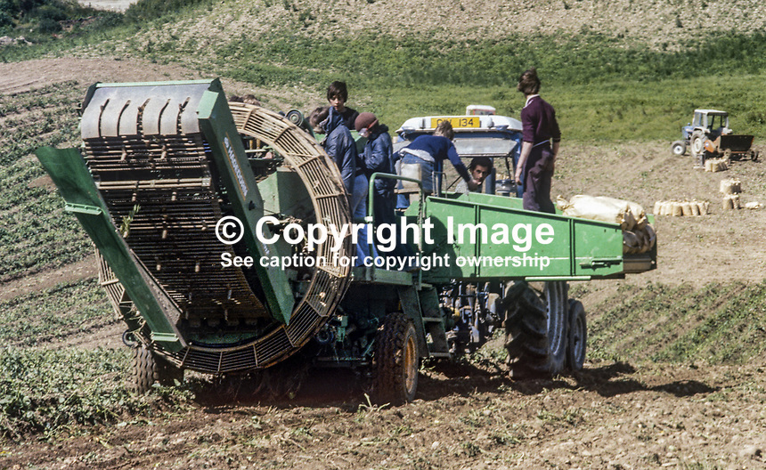 Potato gathering, largely by school children, on the farm of Tommy Craig, Drumahoe, near Londonderry, N Ireland, July 1978, 197807000201b<br /><br />Copyright Image from Victor Patterson, 54 Dorchester Park, <br />Belfast, UK, BT9 6RJ<br /><br />t1: +44 28 9066 1296 (from Rep of Ireland 048 9066 1296)<br />t2: +44 28 9002 2446 (from Rep of Ireland 048 9002 2446)<br />m: +44 7802 353836<br /><br />victorpatterson@me.com<br />www.victorpatterson.com<br /><br />Please see my Terms and Conditions of Use at VICTORPATTERSON.COM. It is IMPORTANT that you familiarise yourself with them.<br /><br />Images used on the Internet must be visibly watermarked i.e. &copy;VICTORPATTERSON.COM within the body of the image and copyright metadata must not be deleted. Images used on the Internet have a size restriction of 4kbs and are chargeable at the then current NUJ rates.<br /><br />This image is only available for the use of the download recipient i.e. television station, newspaper, magazine, book publisher, etc, and must not be passed on to any third party. It is also downloaded on condition that each and every usage is notified within 7 days to victorpatterson@me.com<br /><br />The right of Victor Patterson to be identified as the author is asserted in accordance with The Copyright Designs And Patents Act (1988).