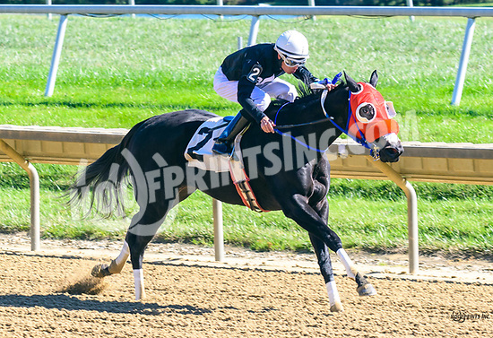 Midnight Rodeo winning at Delaware Park on 10/19/17