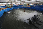 A picture shows fish pools at a fish farm, in Gaza city, on Sept. 14, 2017. Photo by Mohammed Asad