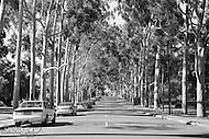 Image Ref: CA377<br /> Location: Perth<br /> Date: 15 Jan 2016