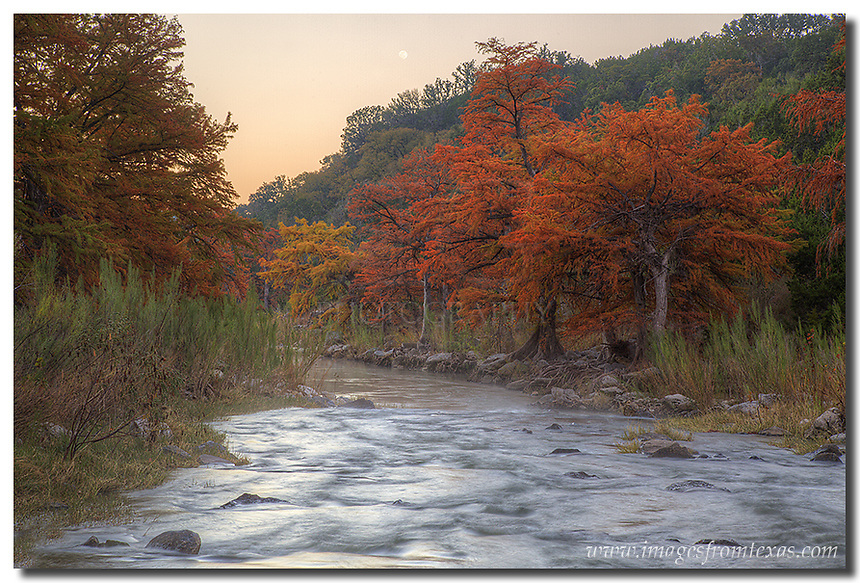 Along the banks of the Pedernales River, the cypress leaves begin to change as the weather cools in mid-November. This is the autumn version of Texas colors, and here in the Texas Hill Country, the colors can be stunning.