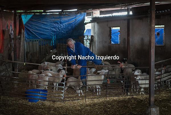 Un pastor de ciudad