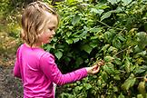 USA, Alaska, Homer, China Poot Bay, Kachemak Bay, berry picking at Kachemak Bay Wilderness Lodge