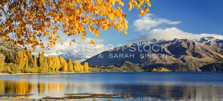 Autumn trees around Lake Wanaka and looking through to Mt Aspiring, New Zealand - stock photo, canvas, fine art print