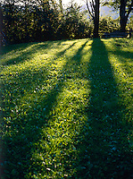 SUNLIGHT &amp; SHADOW ON GRASS<br />